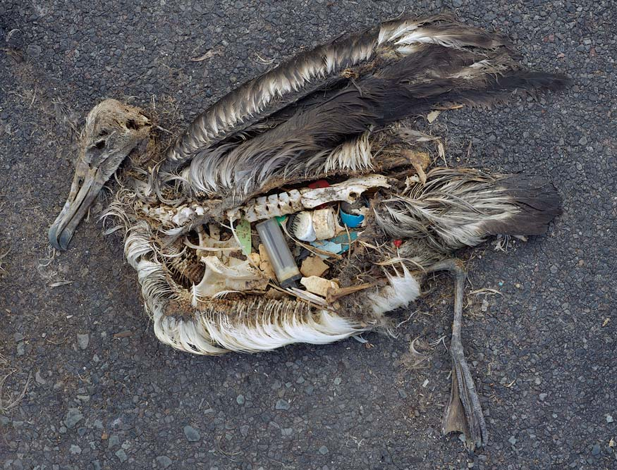 Great Pacific Garbage Patch | 875 x 667 · 220 kB · jpeg