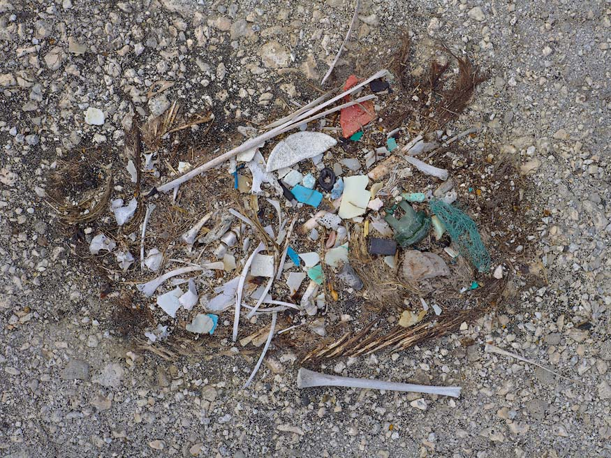 Consecuencias de arrojar basura