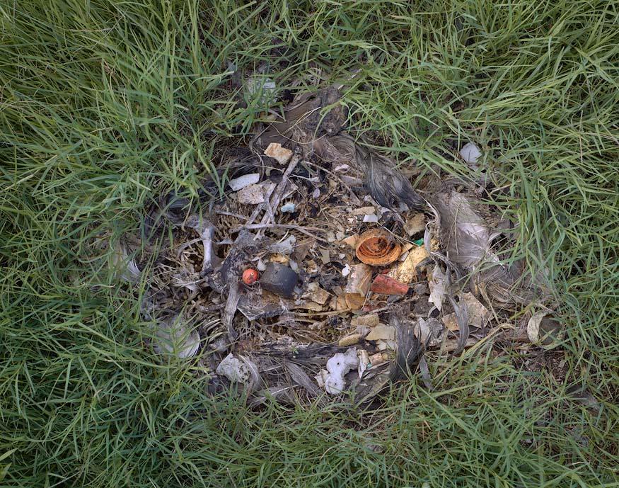 Consecuencias de arrojar basura en las playas
